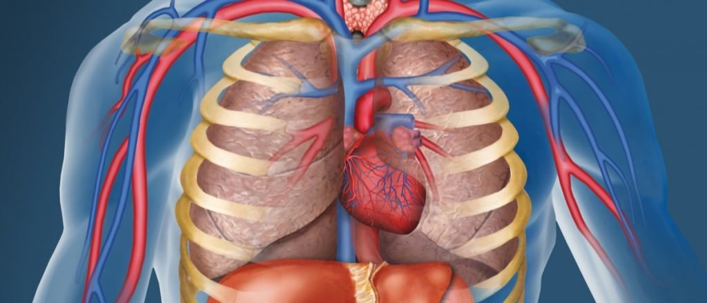 Как определить аневризму брюшной аорты