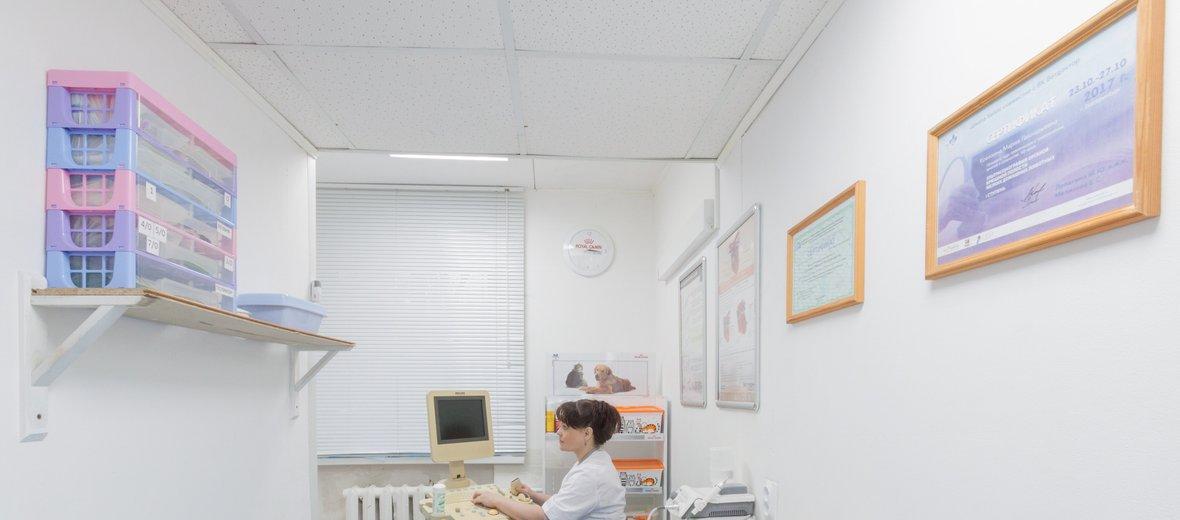 Фотогалерея - Ветеринарная клиника Бэмби