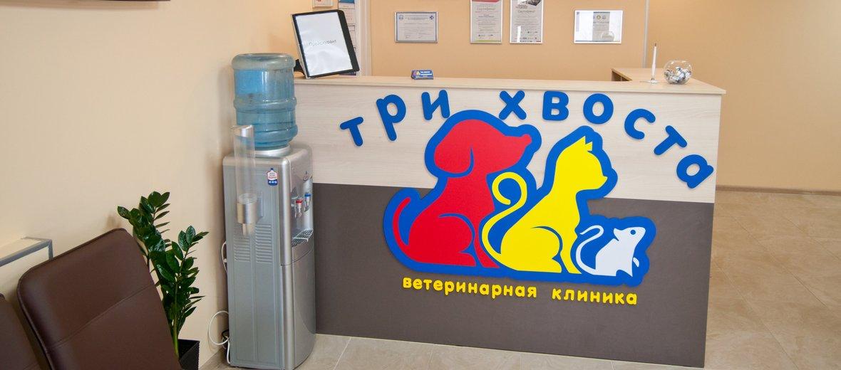 Фотогалерея - Ветеринарная клиника Три Хвоста на улице Мира