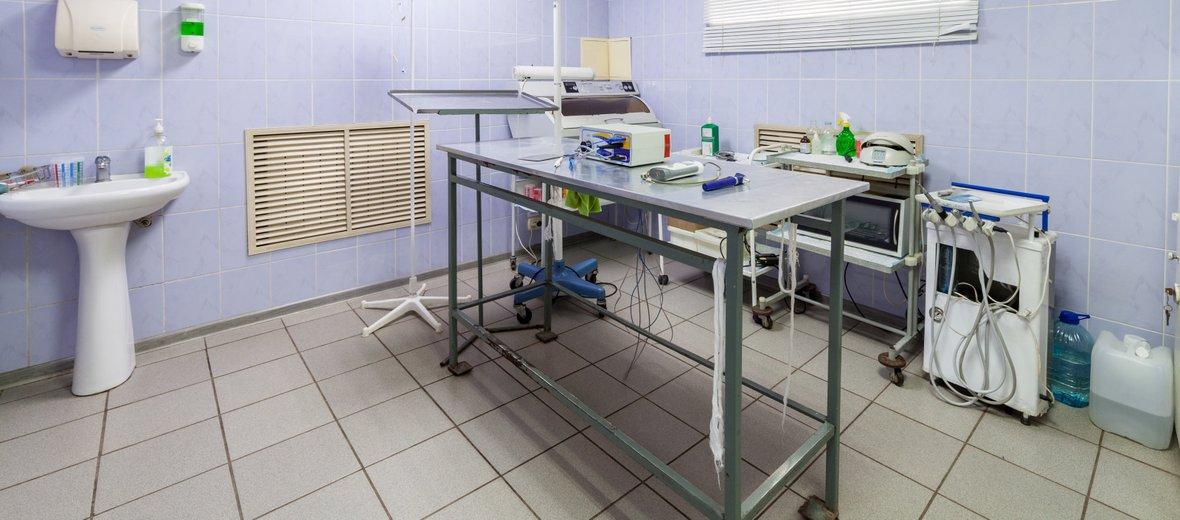 Фотогалерея - Ветеринарная клиника Снежный барс в микрорайоне Канищево