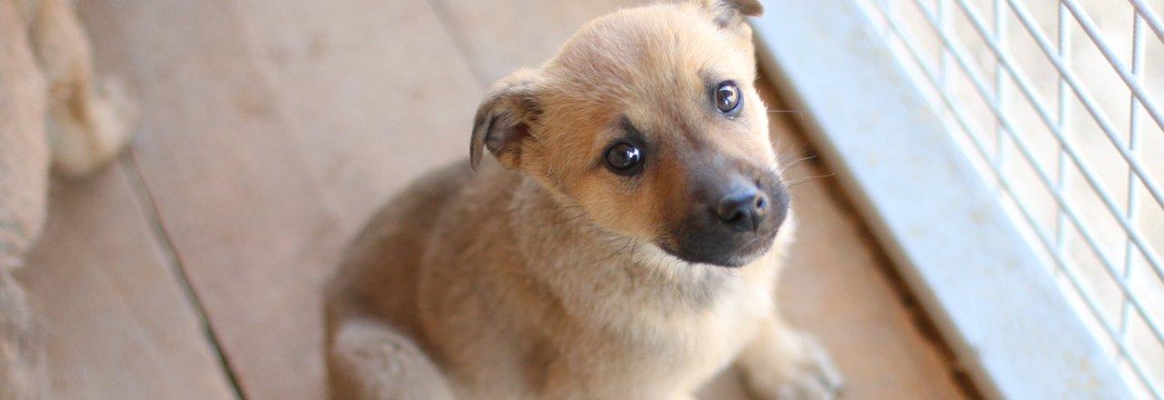 фотография Приюта для животных Супер Собака