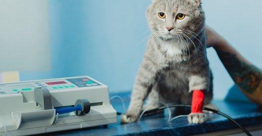 фотография Ветеринарной клиники Шанс-Био на 10-й Парковой улице, 3