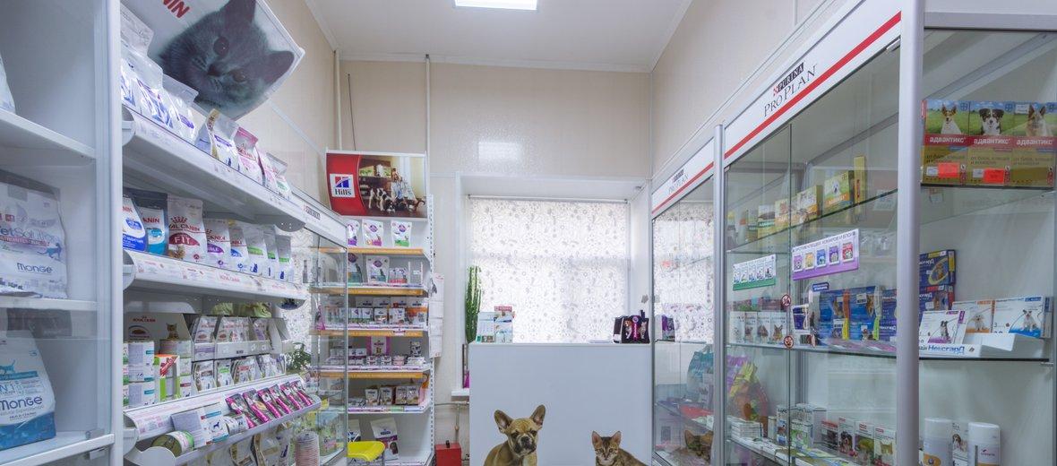 Фотогалерея - Ветеринарная клиника Лео-вет на улице Глеба Успенского