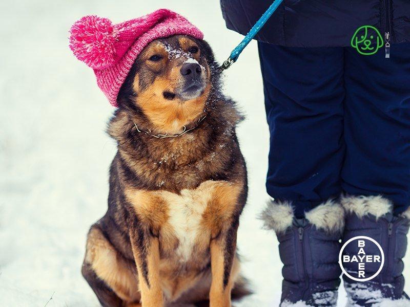 фотография Ветеринарной клиники Никольская на Октябрьской улице, 16 в Никольском