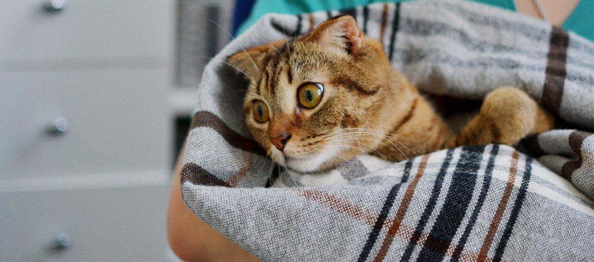 Фотогалерея - Ветеринарная клиника Веста в Марьиной роще