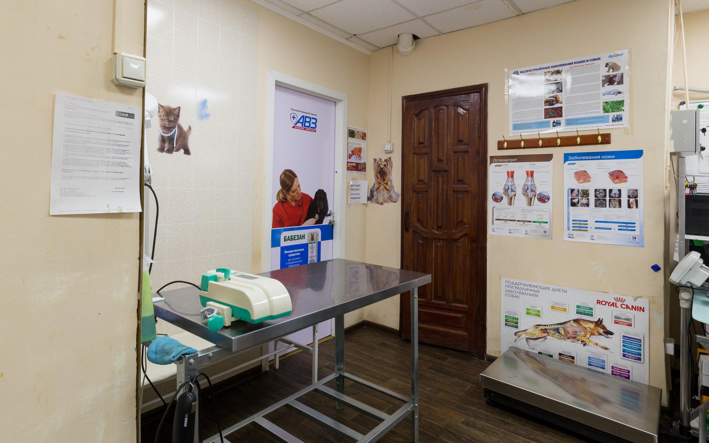 Ветеринарная клиника quotАнитаquot в Иванове отзывы о