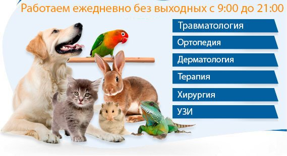 фотография Центр здоровья животных Ветэксперт на Базовской улице