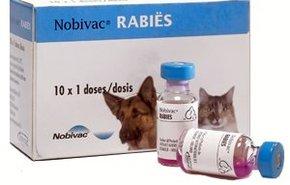 фотография Вакцинация кошек