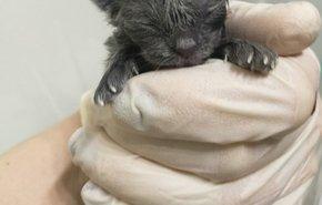 фотография Родовспоможение кошке