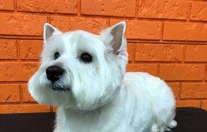 фотография Стрижка средних собак