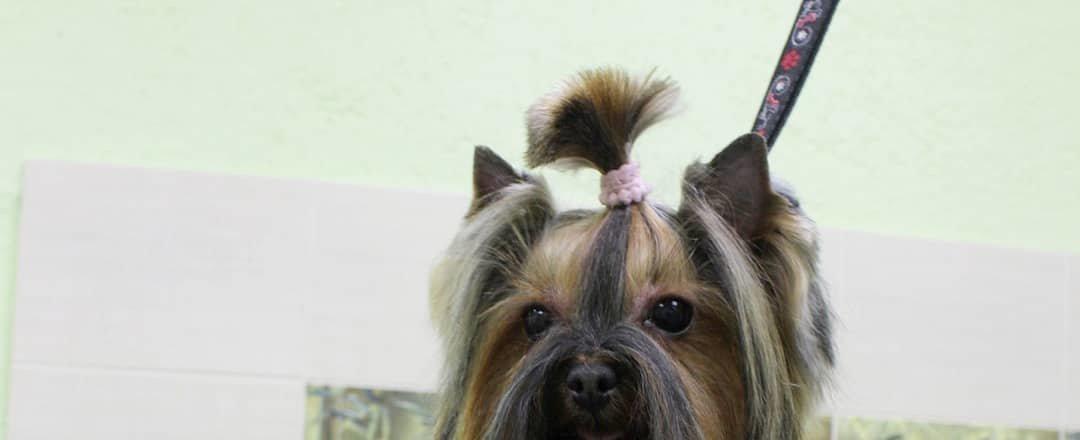 фотография Зоосалона Остров собак на Смольной улице