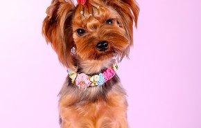 фотография Стрижка мелких собак