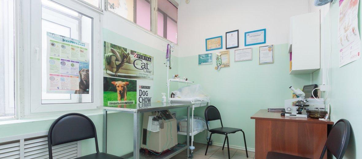 Фотогалерея - Ветеринарная клиника Леон на улице Белинского